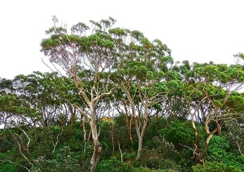 Image result for tree change move
